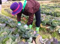 農家の親戚プロジェクト