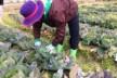 農家の親戚プロジェクトがスタートします!