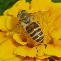 ミツバチのいるまち福岡!知ってるようで知らないみつばちのヒミツ