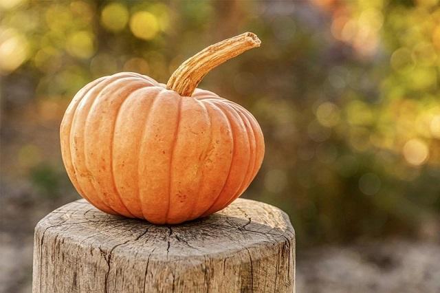【テン大books】11月企画 ~秋の収穫 ~